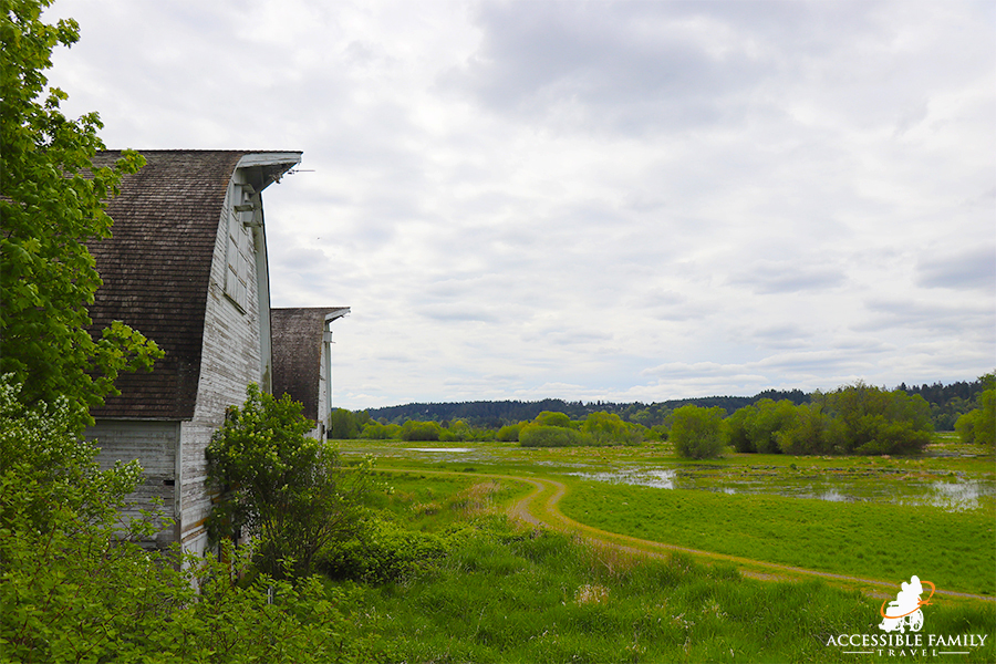 View of two white barns overlook field at the Billy Frank Nisqually National Wildlife Refuge